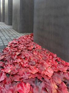 red leaves river