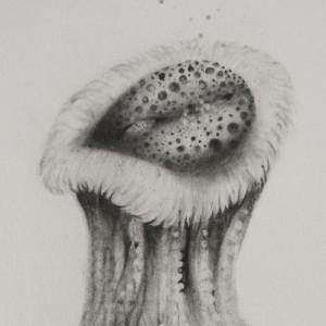 2015. Fleurs de chair (Fleisch Blumen), Serie 1